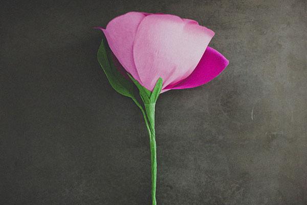 ogromnye-tsvety10 Свадебный мастер-класс: гигантские розы