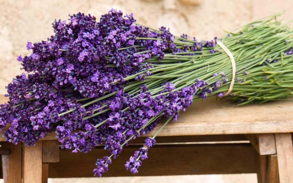 Nature___Flowers_____A_bouquet_of_lavender_on_the_bench_086719_19 Свадебные букеты, идеи и советы!