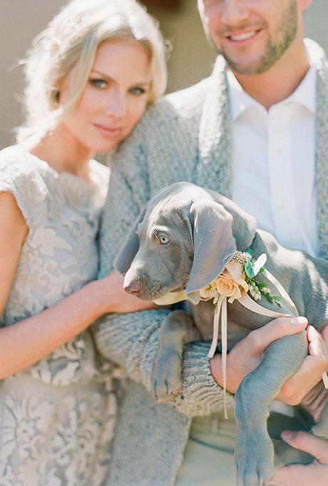Fotopodborka-zhivotnye-na-svadbe3 Фотоподборка: животные на свадьбе