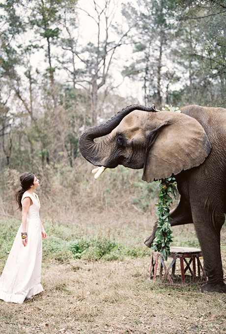 Fotopodborka-zhivotnye-na-svadbe4 Фотоподборка: животные на свадьбе