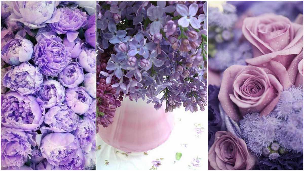 svadba-v-sirenevom-tsvete-10 Свадебное оформление в сиреневом цвете в сочетании с белым цветом для летней свадьбы